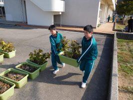 黒豆収穫1